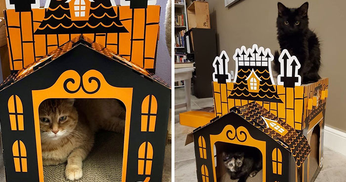 Target Sells Mini Haunted Houses For Cats And They're Purrfect For Halloween