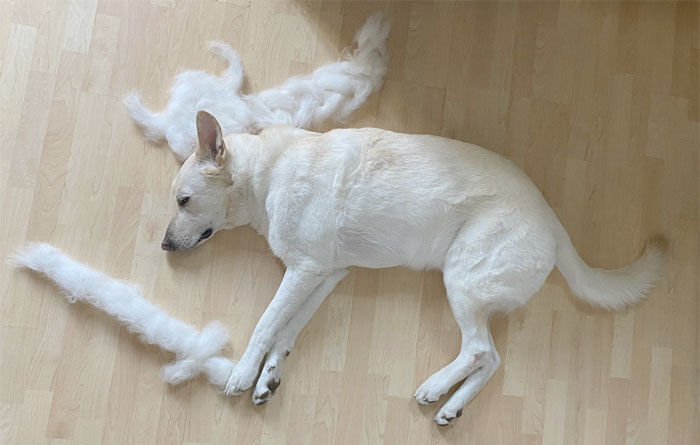 Woman Makes Her Rescue Dog's Shedding Fun By Turning It Into Art