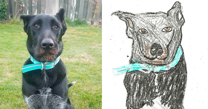 Person Shares What They Got When They Donated $45 To The Humane Society For 3 Hand-Drawn Portraits Of Their Pets