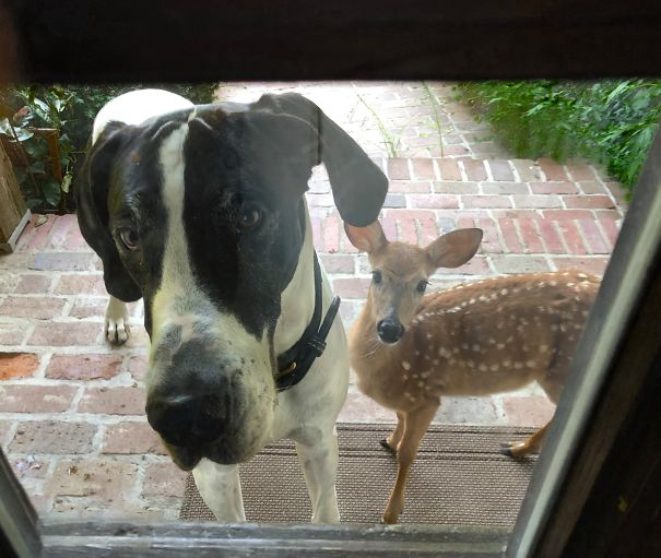 "Looking Out The Front Door. ""I Made A New Friend, Please Can I Keep Him?"""