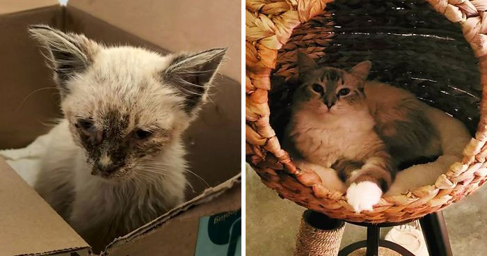 'Skin And Bones': Stray Cat Gets Rescued, Finds A Loving Home, And Transforms Unrecognizably