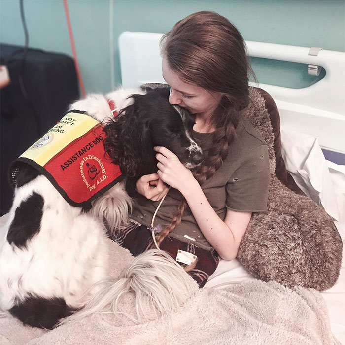A Girl With A Disability Has The Most Adorable Helper – A Springer Spaniel Named Ted (17 Pics)
