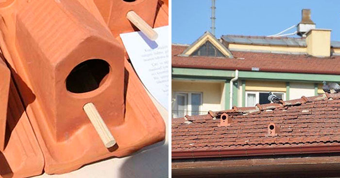 These Multipurpose Roof Tiles Also Provide A House For Birds