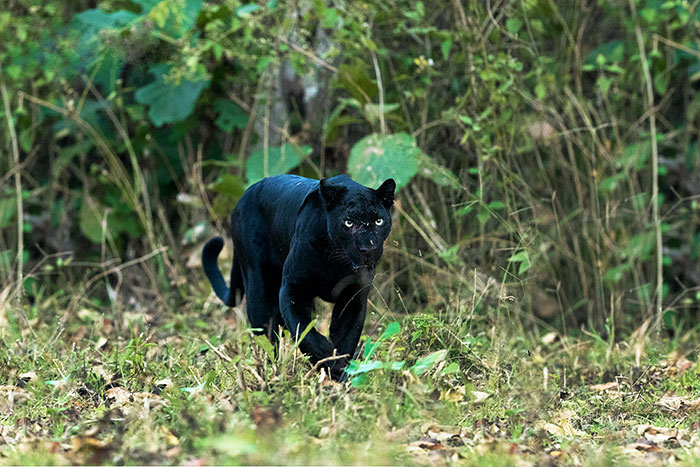 40 Beautiful And Elusive Animals I Found In India