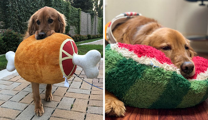Here Are 25 Photos Of The Dog Who Won't Leave Her House Without One Of Her Plushies