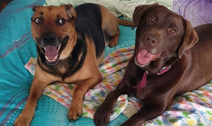 50 Photos By Our Readers Of Their Pets Just Moments After They'd Adopted Them