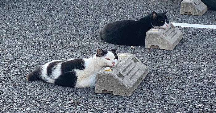 Someone Notices That Cats Use Parking Bumpers As Pillows, And 10 People Post Their Own Funny But Wholesome Pics