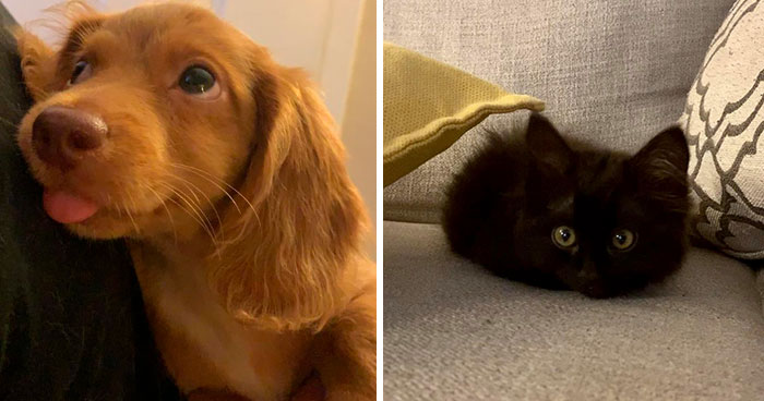 50 Most Wholesome Rescue Pet Photos Of The Month (August Edition)