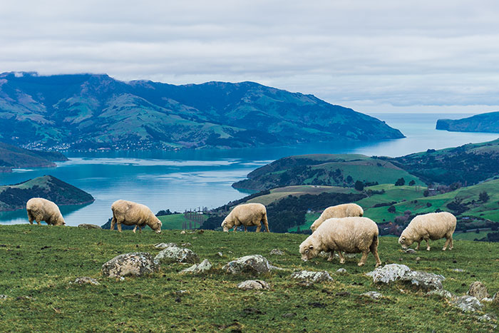 I Traveled To New Zealand And Captured Its Unique Landscapes And Nature (38 Pics)