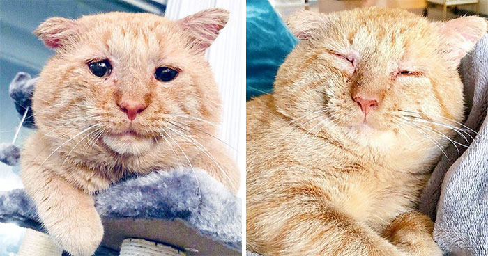 After Convincing Landlord, Woman Brings The Saddest Stray Cat Home, A Year Later, He's Unrecognizable