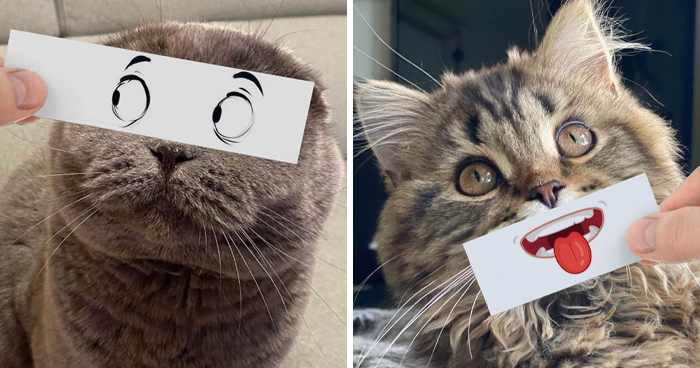 Guy Puts 20 Face Cutouts Over His Cats To Give Them Random Emotions