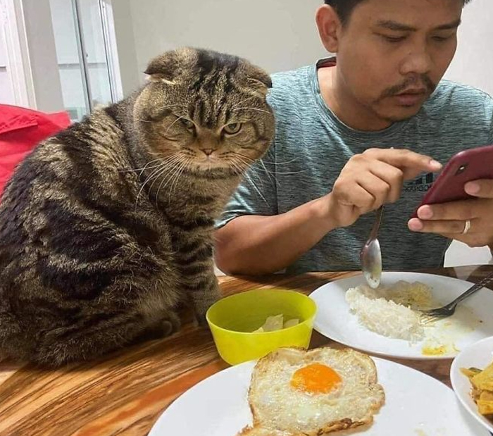 Wife Documents How This Cat Stole Her Husband In 30 Adorable Pics