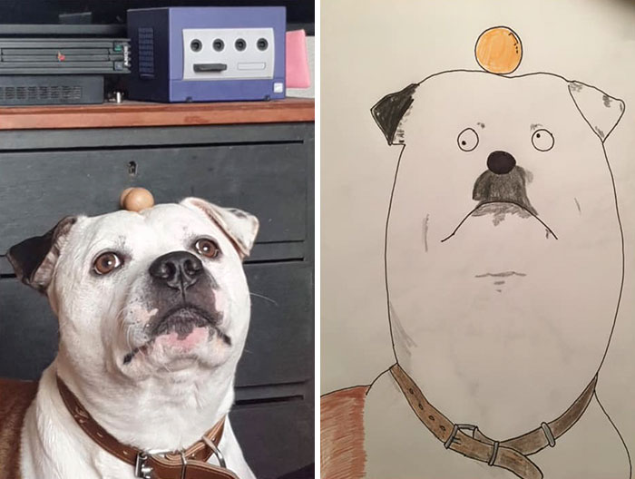 I Have Never Drawn In My Life, But I Am Doing Crappy Pet Portraits To Raise Money For Charity (30 Pics)