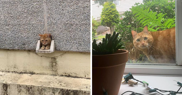 'Catspotting' Is A Facebook Group Where People Share The Best, Unexpected Encounters With Cats (40 Pics)