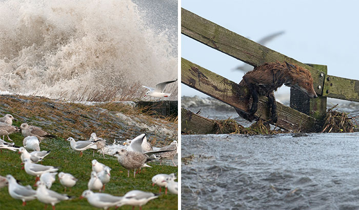 I've Been Photographing Storms During Dutch Tides For 7 Years, Here Are My 28 Pics To Capture Their Effect On Local Wildlife