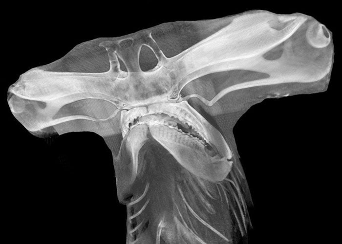 50 Times People X-Rayed Things And Got Interesting Results