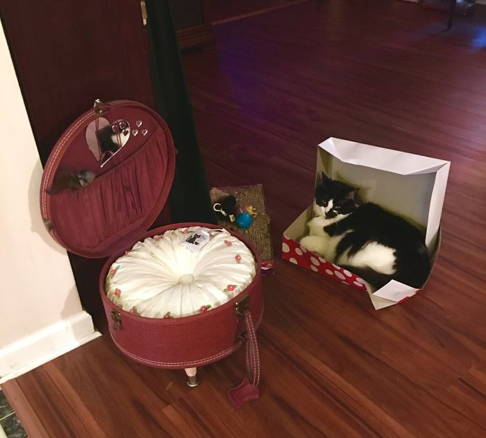 My Mom Made A Fancy Bed For Her Cat Out Of An Old Suitcase