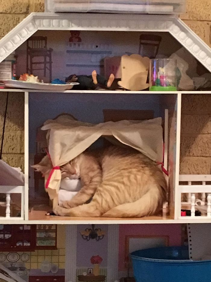 Cat Was Tired And Jumped Into My Daughter Doll House And Actually Used The Bed