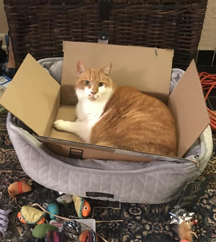 Bought Him A Nice Cat Bed- Refuses To Use It Without The Box Inside It