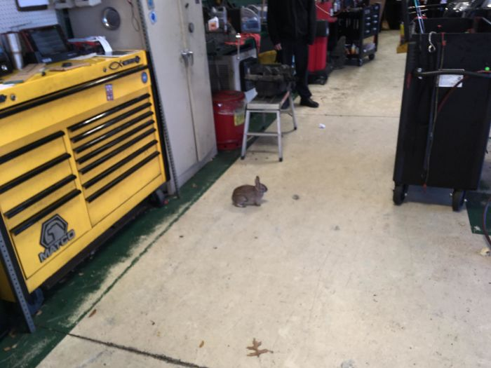 Just Hopped Into The Shop