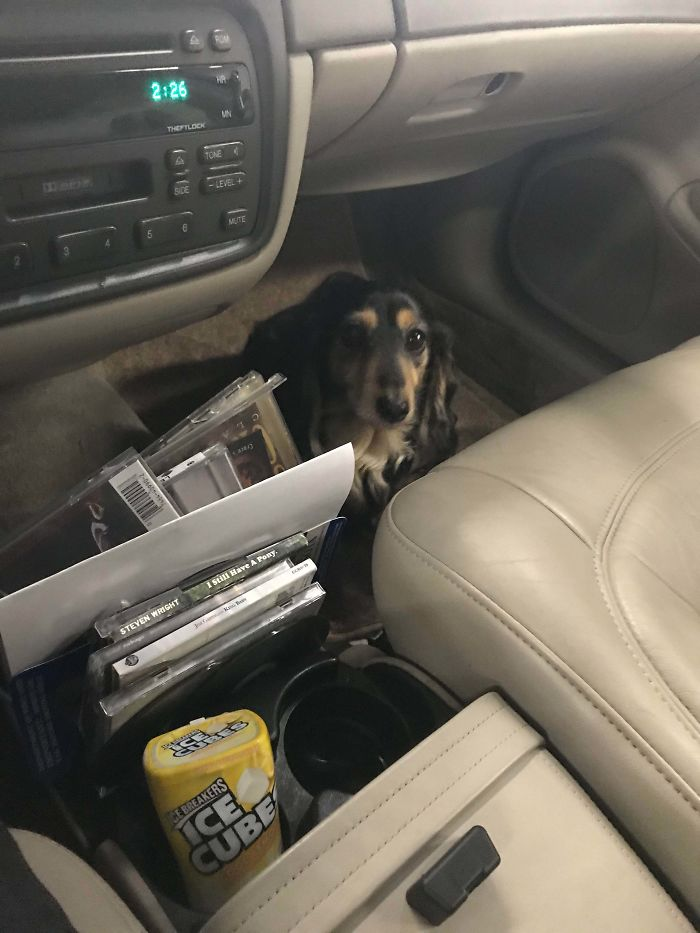 This Little Girl Helped Me Check Codes In Her Owner's Car Today. Good Girl
