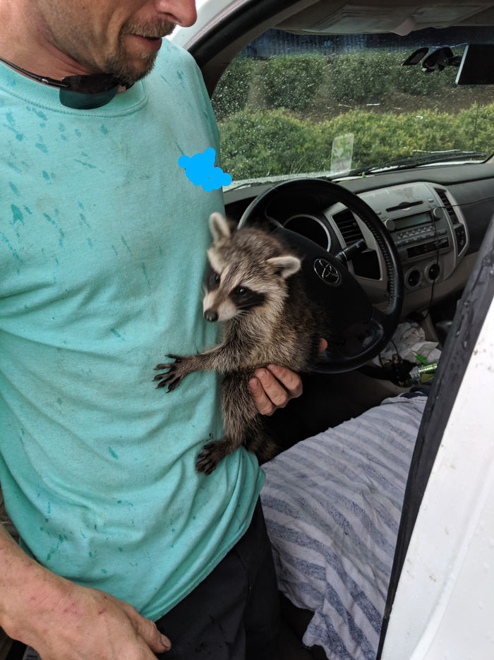 """Customer: """"Let Me Know When You Are About To Pull My Truck In So I Can Get My Raccoon"""" And He Sat In The Lobby With A Raccoon Until His Truck Was Done"""