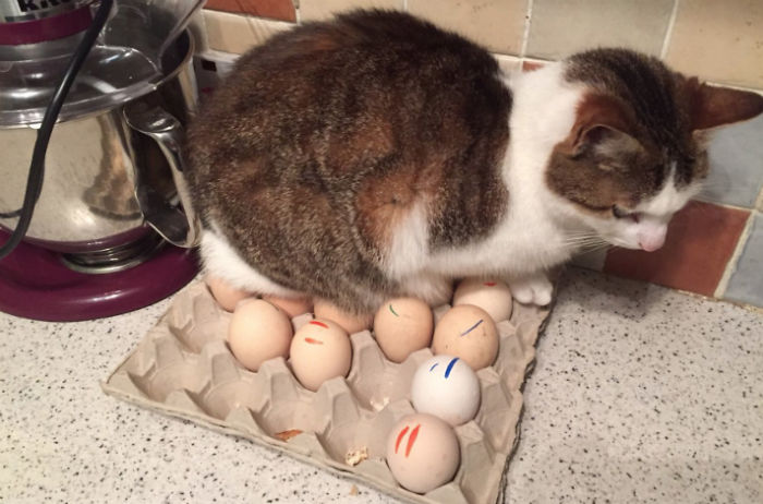 Five Beds And Ten Chairs In The House. He Sits On The Eggs