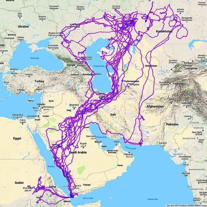 Tracking Of An Eagle Over A 20 Year Period