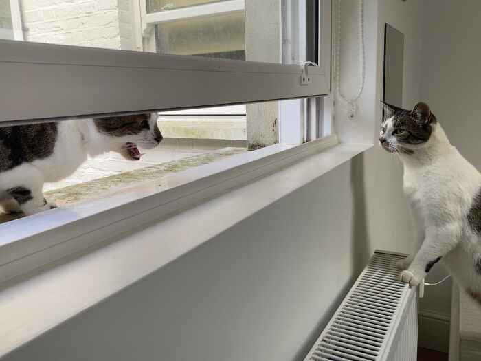 My Neighbor's Cat Drops By Every Once In A While To Stick His Head Through The Window And Scream At My Cat