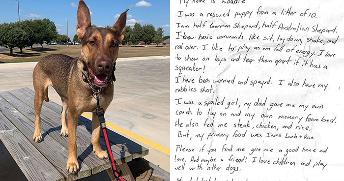 This Dog Was Found With A Heartbreaking Message In A Bottle On Her Collar