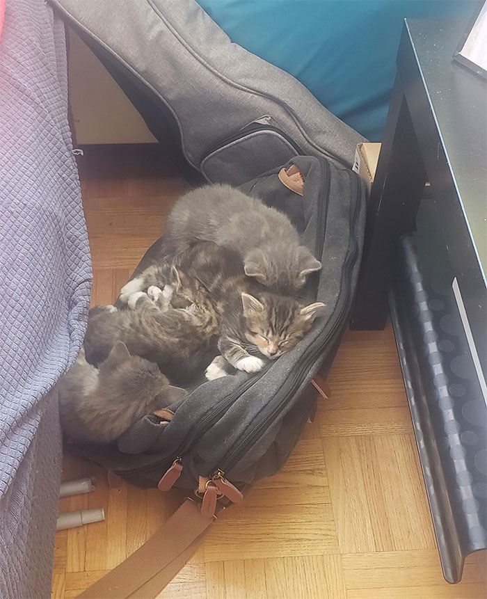 Got Them A Bed And 10 Different Blankets, They Won't Sleep Anywhere Else Than On My Laptop Bag