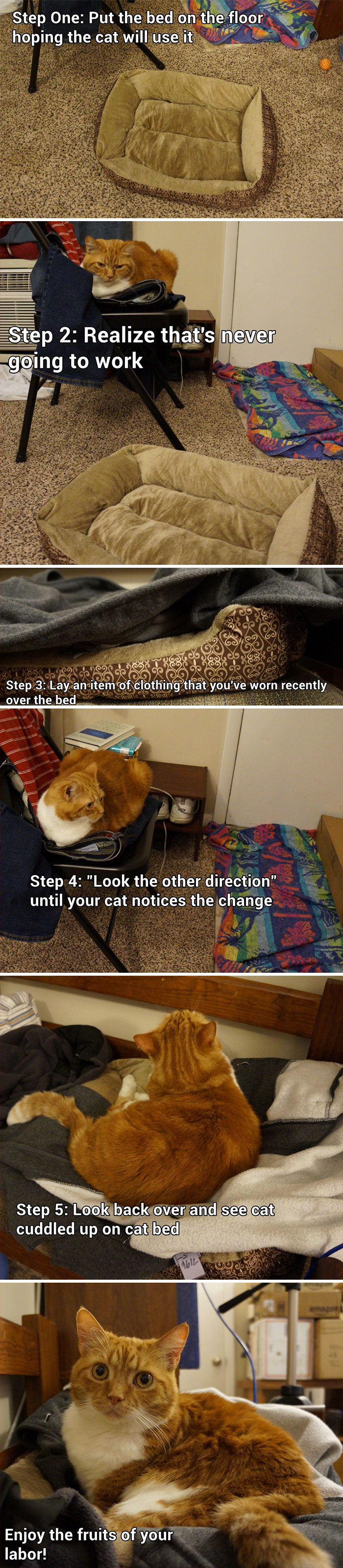 How To Get Your Cat To Use A Pet Bed