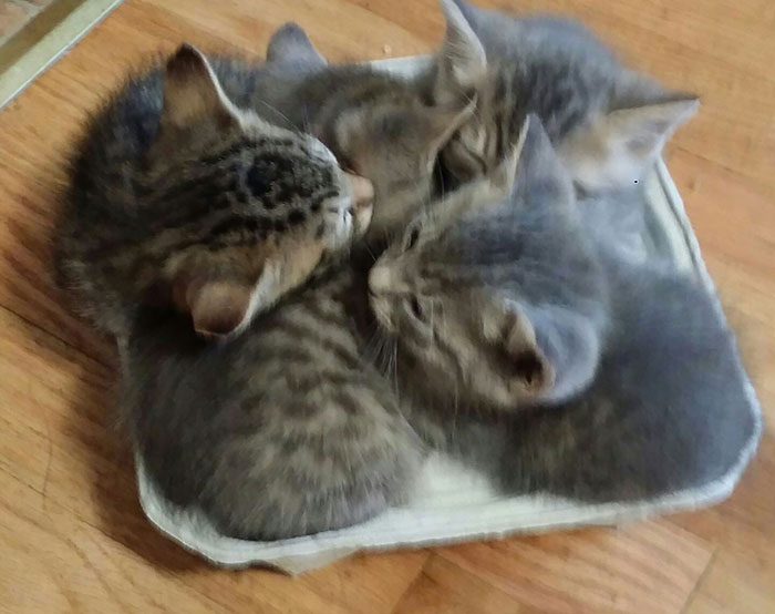 My Cat's Kittens Have Found A New Cozy Bed... In A Cup Holder