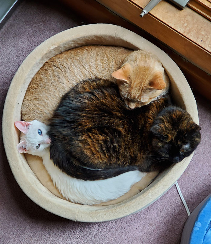 4 Beds For 3 Cats And They Do This