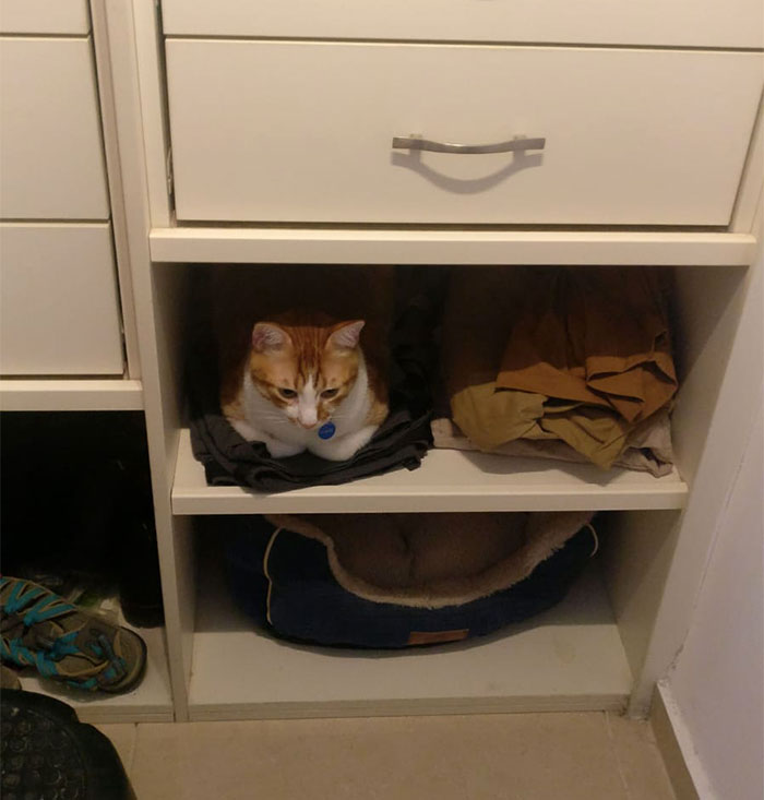 My Cat Has Been Sleeping On My Pants On The Bottom Shelf Of Our Closet Lately, So I Asked My Wife To Move The Pants And Put A Cat Bed In There. Cat's Response