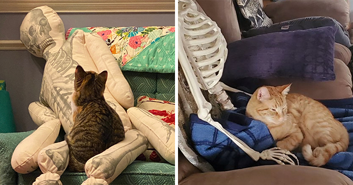 Woman Finds Out And Posts Pictures Of How Cats Would React If You Suddenly Died At Home