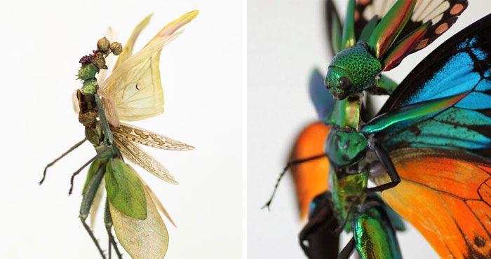 Here Are 18 Surreal Bug Fairies Made From Dead Insects Made By This Amsterdam-Based Artist