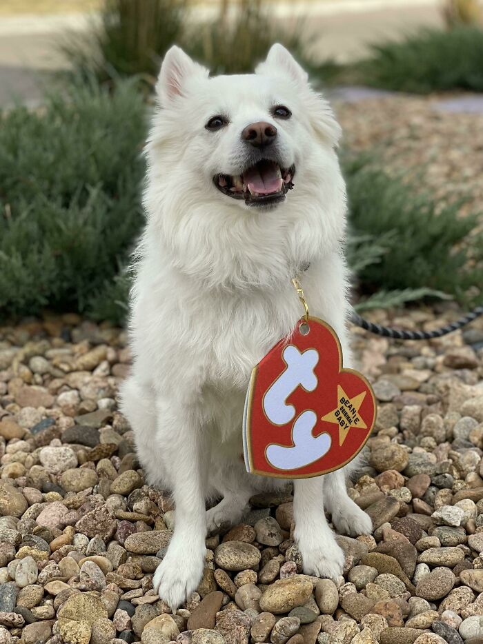 My Dog Is A Beanie Baby For Halloween