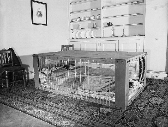 """A British Couple Sleeps Inside A """"Morrison Shelter"""" Used As Protection From Collapsing Homes During The WWII 'Blitz' Bombing Raids... March 1941"""