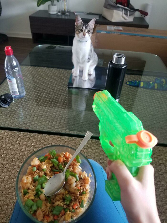 Got A New Kitten Who Has No Fear, This Is How I Have To Eat Every Meal Now