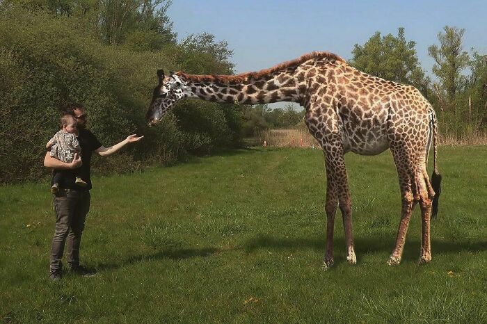 At Least Wildlife Is Returning To The Parks Of Antwerp