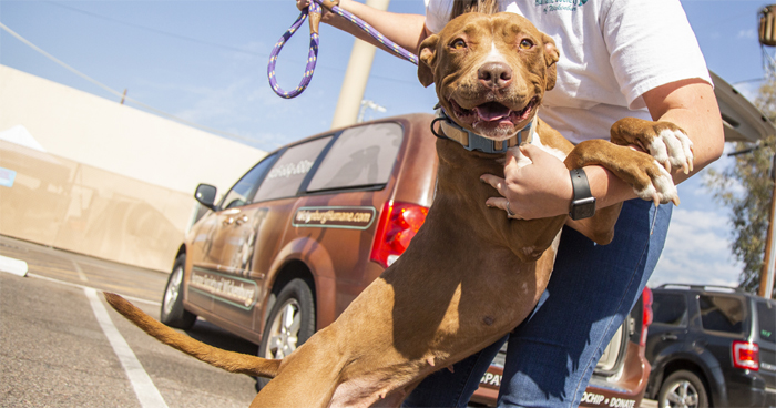 2 Y.O. Dog Adopted After More Than 400 Days At The Wickenburg Humane Society Shelter