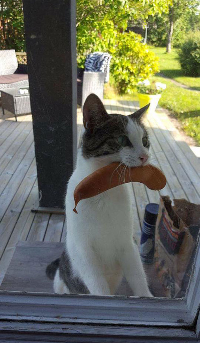 Cat Returns With Sausage Stolen From Unknown Neighbors BBQ