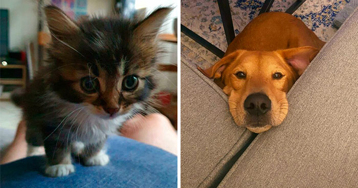 40 Of The Most Wholesome Rescue Pet Photos Of The Month (November Edition)