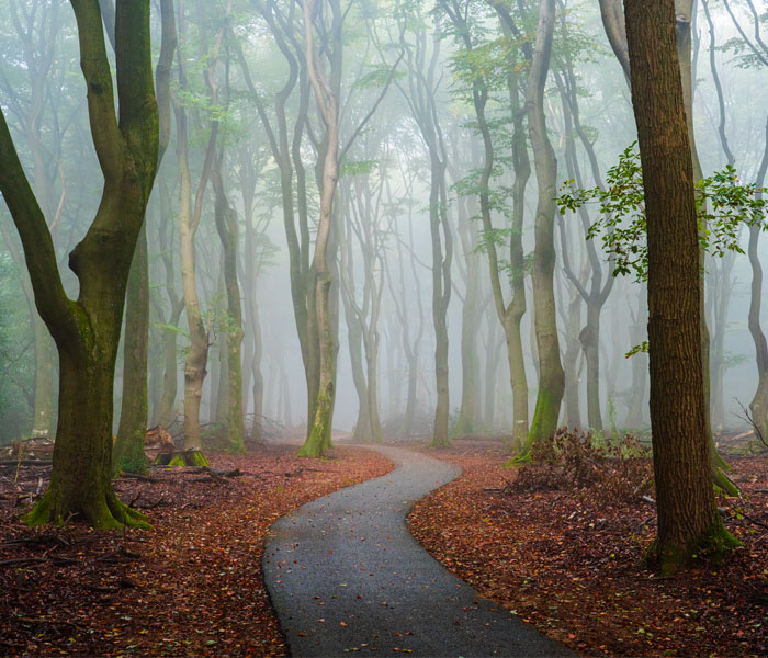 I Photographed Foggy Forest Roads And Paths In The Netherlands During Each Season (30 Pics)