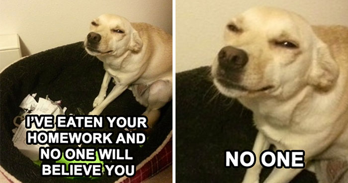50 Of The Funniest Dog Memes Ever