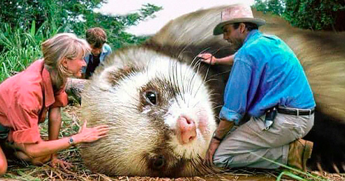 Someone Replaced Jurassic Park Dinosaurs With Ferrets, And This Version Is Probably Better Than The Original