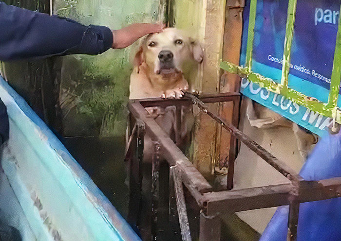 Dog Saved From Flood In Mexico, Gets Taken In By The Mexican Marines Who Saved Him