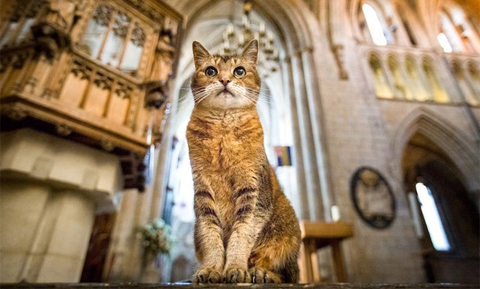Cat Who Lived In A Church For 12 Years Passes Away, The Church Gives Her An Entire Memorial Service