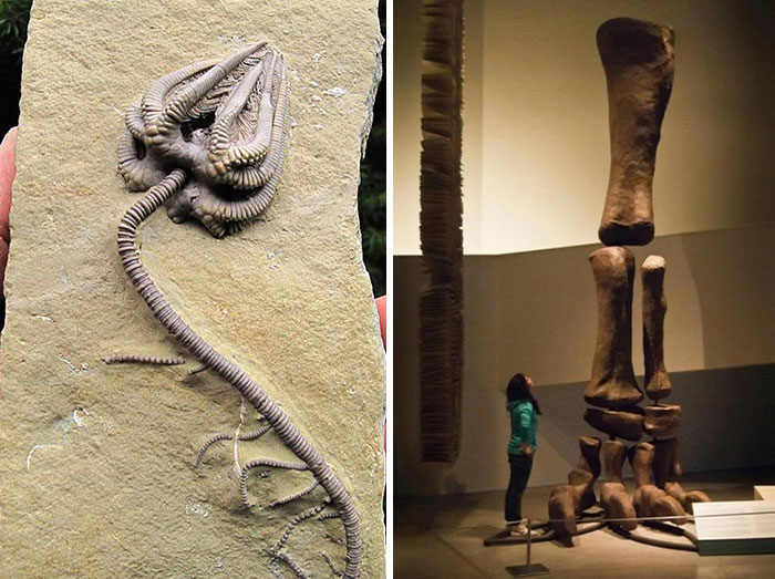 19 Ancient Fossils That'll Make You Say 'Whoa'